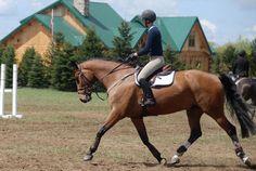 Pretty Horses, Beautiful Horses, Hunter Horse, Different Horse Breeds, English Riding, Hunter Jumper, Horse Photos, Show Jumping, Horse Barns