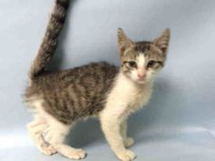 **MURDERED 8/31  JUST 11 WEEKS OLD!  SHELTER COLD, WHICH IS VERY TREATABLE, WAS THE REASON FOR DEATH SENTENCE**  TUNA  **TO BE DESTROYED 08/31/16**