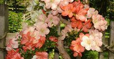 Bonsai in bloom  | M. Jane Cooper