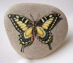 Hand Painted Butterfly Rock by Roberto Rizzo / www.robertorizzo.com