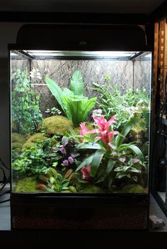 138 Best Terrariums Images In 2019 Terrariums Gallon Of