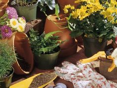 Tips for planting your pots and containers like a pro