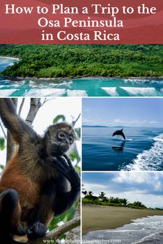 How to Plan a Trip to the Osa Peninsula in Costa Rica | Travel Costa Rica | Corcovado National Park | Wildlife |