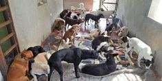 "St. Francis of Assisi-Zarzal needs continuity after 15 years of working for dogs and cats abandoned in the town of Zarzal, Valle-Colombia-as well as monitoring the forest ""MENA"" and the protection of wildlife"