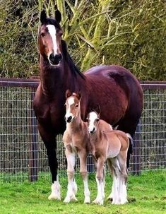 Beautiful Mare with her twin foals Baby Horses, Cute Horses, Horse Love, Most Beautiful Horses, All The Pretty Horses, Animals Beautiful, Cute Baby Animals, Animals And Pets, Funny Animals