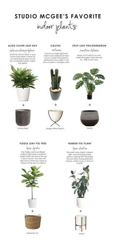 Today we're sharing our top FIVE favorite plants + planters...