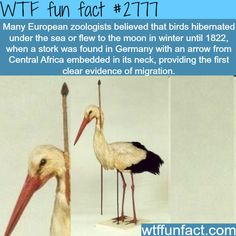 Do birds fly to the moon? that's what they thought - WTF fun facts