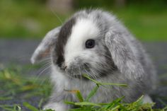 Sweet little bunny ♥