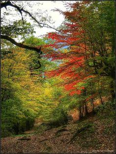 پاییز زیبای ماسال