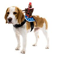 Hund Fahrer Hundekostüm Affe - Hund Kostüme