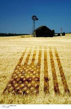 c09636580db Country folks love their Star Spangled Banner. Thank Farmers of America for  feeding us. God Bless the USA.