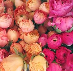 Peonies and colors