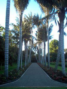 """Jardin Botanico Bogota  """"El Jardín Botánico de Bogotá """"José Celestino Mutis"""" es el jardín botánico más grande de Colombia. Se encuentra en en la sabana de Bogotá, a 2 600 msnm, en la faja tropical goza prácticamente de 12 horas de luz solar al día."""" Wikipedia"""
