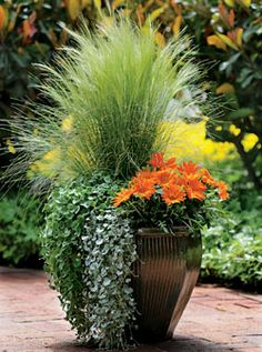 Container Gardening Ideas Orange Surprise, by Ball Horticultural Container Size: 14 inches, Exposure: Sun New Day™ Clear Orange gazania Emerald Falls dichondra Silver Falls™ dichondra Pony Tails Mexican feather grass Fall Planters, Garden Planters, Flower Planters, Balcony Garden, Large Garden Pots, Container Flowers, Container Plants, Container Size, Container Vegetables