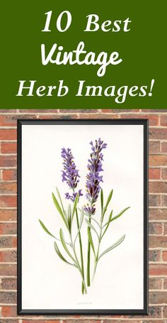 Click to grab the 10 Best Vintage Herb Images! So many free Printables and Downloads from The Graphics Fairy. Great to use in DIY Home Décor and Craft Projects. #Vintage #Botanicals #PrintableArt #WallDecor