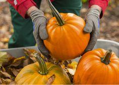 Pumpkin Perks at vitamin shoppe