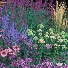 August Afternoons Perennial Garden