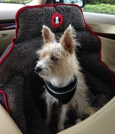 Special discount and free shipping for Bark and Swagger followers. Car Seats For Dogs Is A Gift of Love: PUPSAVER on Bark and Swagger