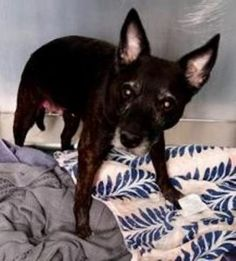 SUPER URGENT 01/04/17 Manhattan Center TULLE – A1100991 FEMALE, BLACK, LABRADOR RETR MIX, 10 yrs STRAY – STRAY WAIT, NO HOLD Reason STRAY Intake condition EXAM REQ Intake Date 01/04/2017, From NY 10029, DueOut Date 01/07/2017,