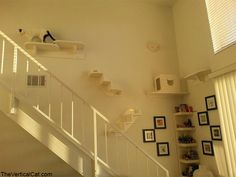 More great ideas for introducing some vertical elements in your kittys life Diy Climbing Wall, Cat Climbing Tree, Crazy Cat Lady, Crazy Cats, Cat Wall Shelves, Cat Heaven, House Essentials, Cat Playground, Super Cat