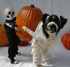 """""""HalloWOOF"""" :: The most unique pet costume ever! (Took a minute to figure out its various parts!)"""
