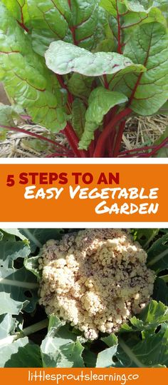 Wish you had yummy homegrown vegetables but don't think you can have an easy vegetable garden? Gardening CAN be a full-time job, but doesn't have to be.