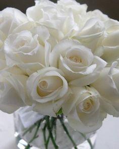 Purely White