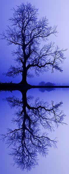 Tree Skeleton Reflection by David Pringle