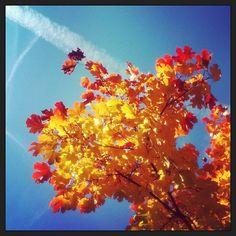 Goldene Zeiten / #herbst #golden #zeiten #autumn #bunt #yellow #gold #blue #heaven #tree #baum #blätter #instamood #instanature #feel #free