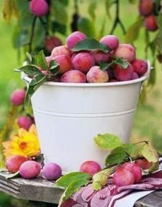 Picking plums in the autumn with my Granny