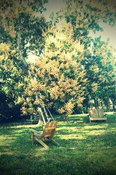 Mom's Mango Tree