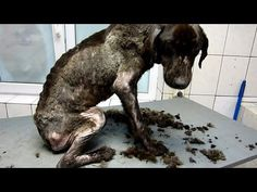 """Inspiring Rescue & Transformation of a Shelter Dog Who Lost All Hope 