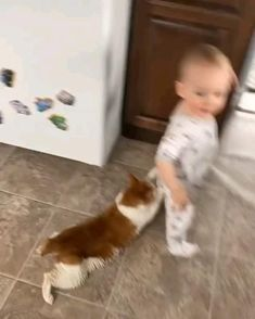Animals For Kids, Animals And Pets, Baby Animals, Cute Animal Videos, Funny Animal Pictures, Funny Dog Videos, Funny Dogs, Funny Babies, I Love Cats