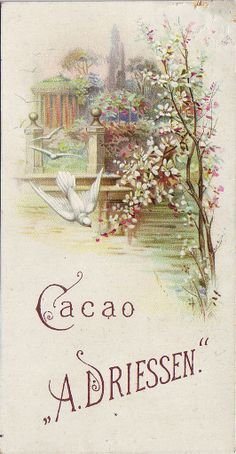 cacao driessen doves flowering trees