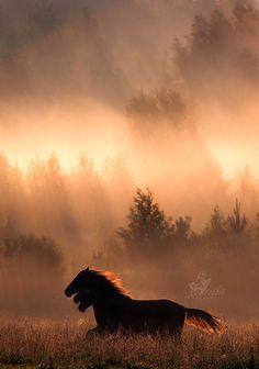 Horse dragon (by Alexia Khruscheva)