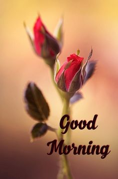 300 Good Morning Pictures Ideas Good Morning Picture Morning Pictures Good Morning
