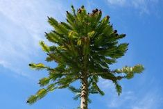 Types Of Trees 101 [All You Need To Know] Need To Know, Around The Worlds, Trees, Gardening, Plants, Tree Structure, Lawn And Garden, Plant, Wood