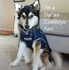 Cheap 57 Best DALLAS COWBOYS ANIMAL FANS images in 2016 | Puppies, Puppys  hot sale
