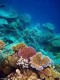 The Best Coral Reef Locations: The Maldives Or The Great Barrier Reef? - The best coral reef locations: the Maldives or the Great Barrier Reef ? Under The Ocean, Sea And Ocean, Fish Ocean, Great Barrier Reef, Fauna Marina, Wale, Underwater Life, Beautiful Ocean, Amazing Nature