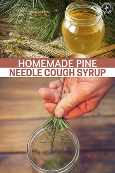 Garden Landscaping Trees Homemade Pine Needle Cough Syrup - What if you were to discover one of the most potent cough suppressant and anti-inflammatory compounds is found in your backyard? Natural Health Remedies, Herbal Remedies, Cold Remedies, Holistic Remedies, Cough Syrup, Pine Needles, Plantation, Herbal Medicine, Natural Medicine