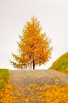 ¿Algún plan para despedir el otoño? Proponlo en Boxvot: http://www.boxvot.es/Default.bv