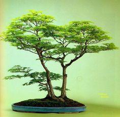 Bonsai: A arte de criar árvores em minatura