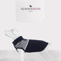 We love Pied de Poule! #AlwaysMineMilano #ItalianLifestyleForPets #fashion #style #cashmere #dog #pieddepoule #dogcoat #cute #chihuahua #dogs_of_instagram #pet #pets #pieddepoule #petstagram #fashion #sartorialhound #dogsofinstagram #instagramdogs #dogstagram #dogoftheday #lovedogs #fashion #adorable #tranoifemme #tranoi #tranoifemmeaw1617 #インスタ #voguejapan