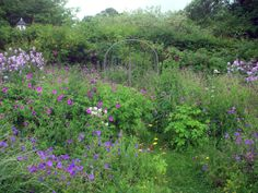 Gorgeous perennial garden with geraniums, cranesbill.Sticky Wicket