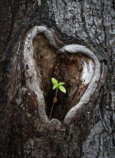 Tree trunk heart