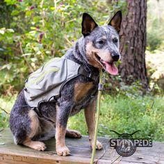 Australian Cattle Dog | Blue Heeler | Hiking | Backpacking | Ruffwear