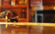eyes cats depth of field reflections tabletop