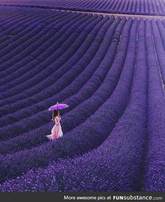 The Lavender Fields of Valensole, Provence, France Purple Love, All Things Purple, Purple Rain, Shades Of Purple, Provence Lavender, Lavender Blue, Lavender Flowers, Lavender Fields France, Blue Lace