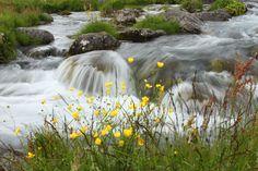 Við fossinn Dynjanda.  Near the waterfall Dynjandi, Iceland
