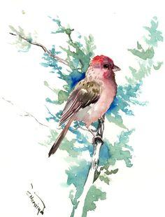 House finch, original one of a kind bird wall art, bird watching gift